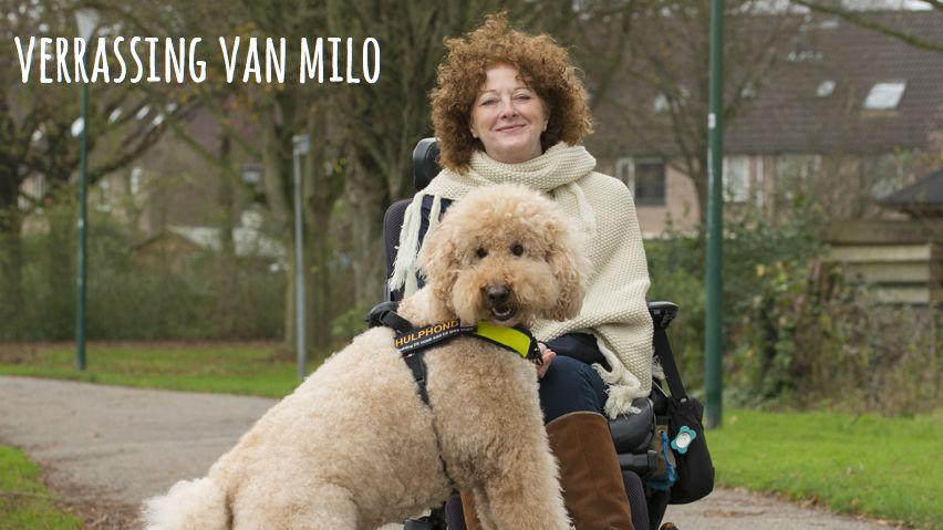 Verrassing Van Milo #mantelzorg4voeters